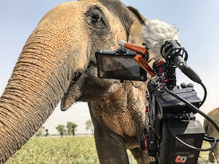Director of photography Joe Callahan recently completed principal photography on a feature-length documentary about wildlife rescue and rehabilitation in India.