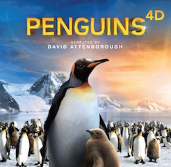 Penguins 4D is among the programs shown at the Discovery Cube.